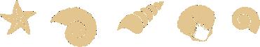 shells-divider-hahei